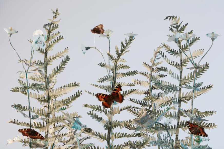 money flowers ferns butterflies