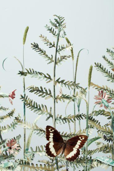 Specimen Pteridium Aquilinum III. Detail
