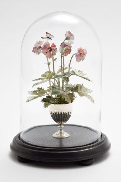 Specimen Geranium Endressii