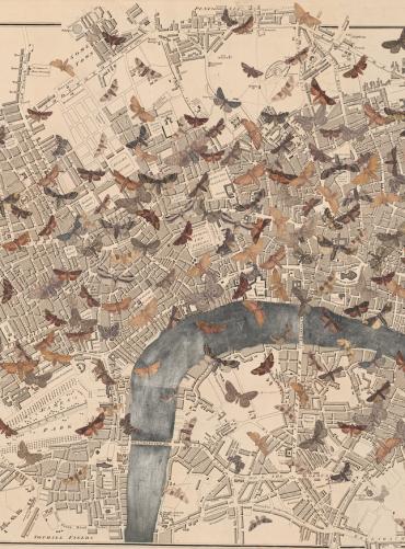 Inhabitants. Detail