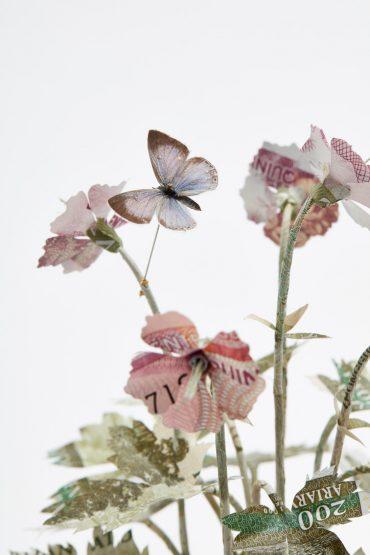 Specimen Geranium Endressii. Detail