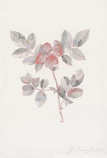 Specimen Rosa Canina II
