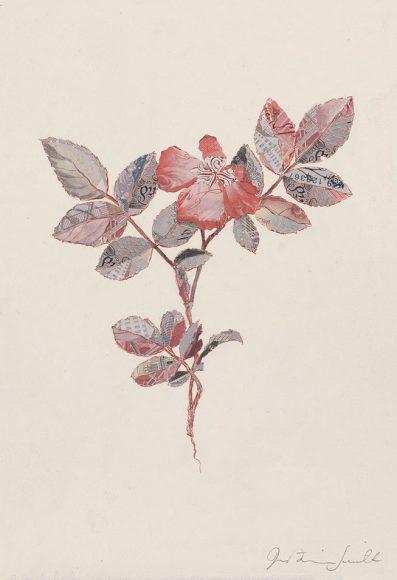Specimen Rosa Canina I