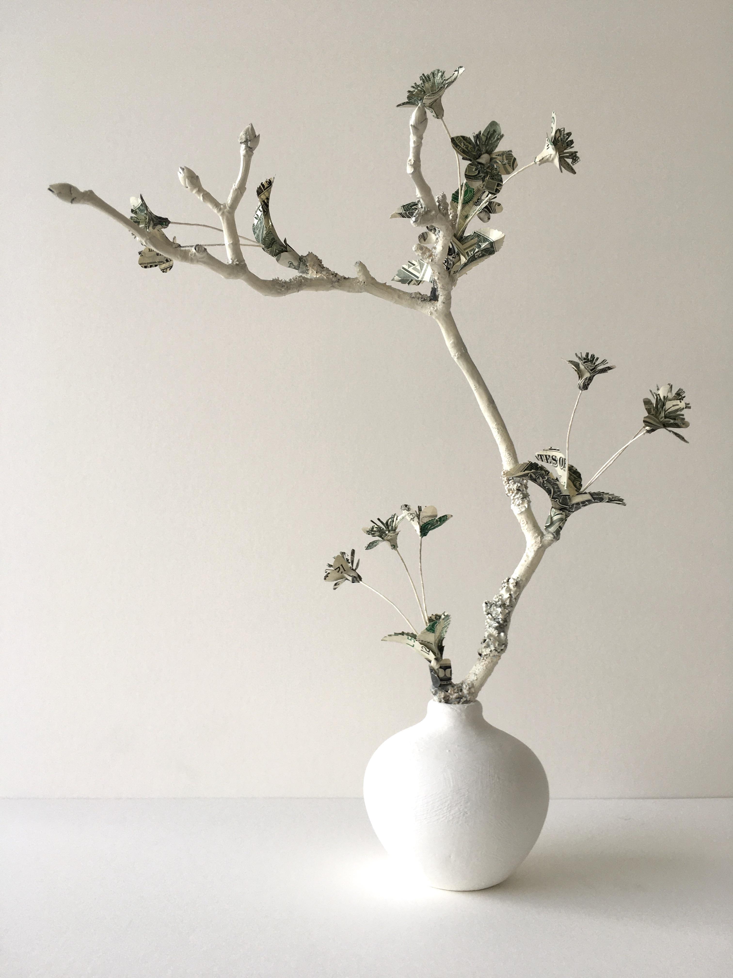 Specimen Prunus Washingtonia