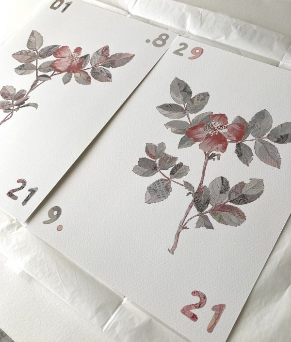 Specimen Rosa Canina I & II Limited edition prints