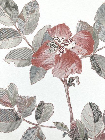 Specimen Rosa Canina II Detail