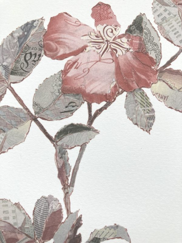 Specimen Rosa Canina I Detail