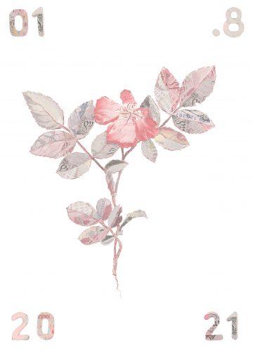 Specimen Rosa Canina I edition