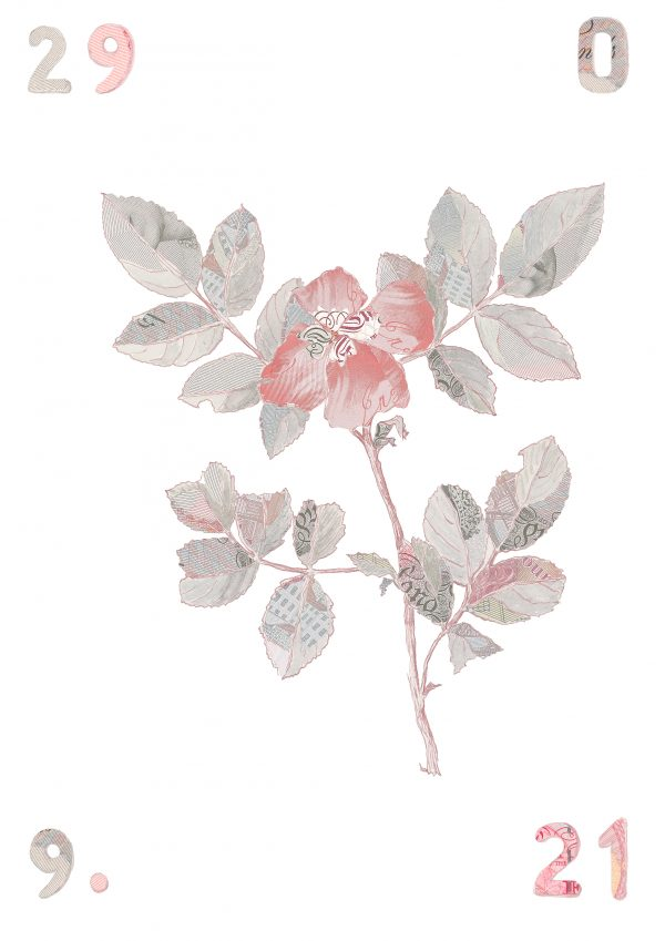 Specimen Rosa Canina II edition